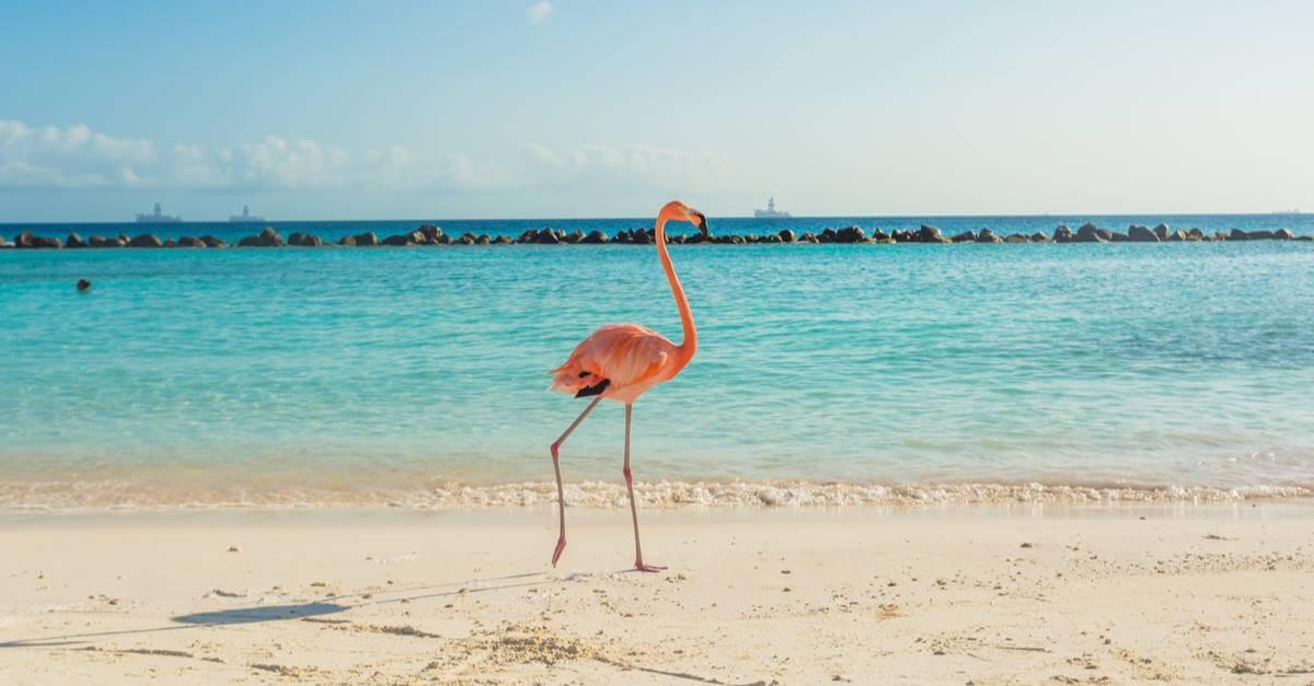 Flamingo Healthz